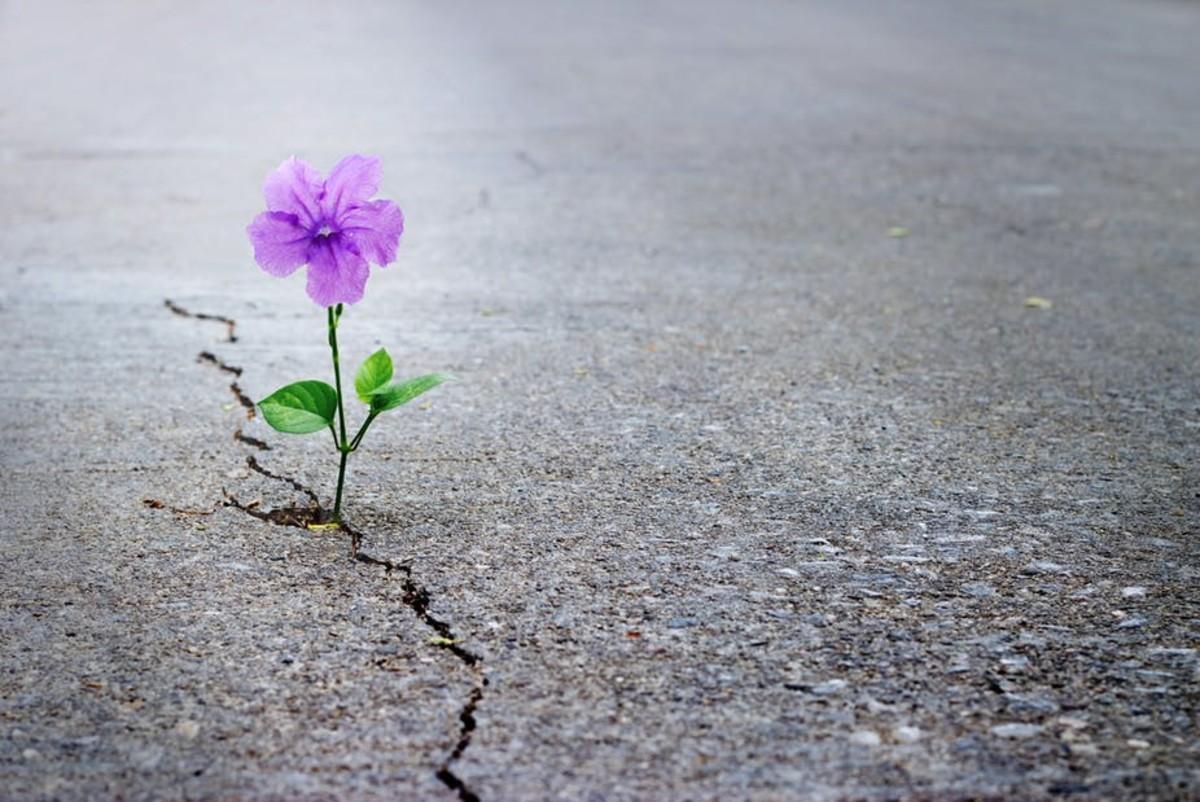 emerging-hope