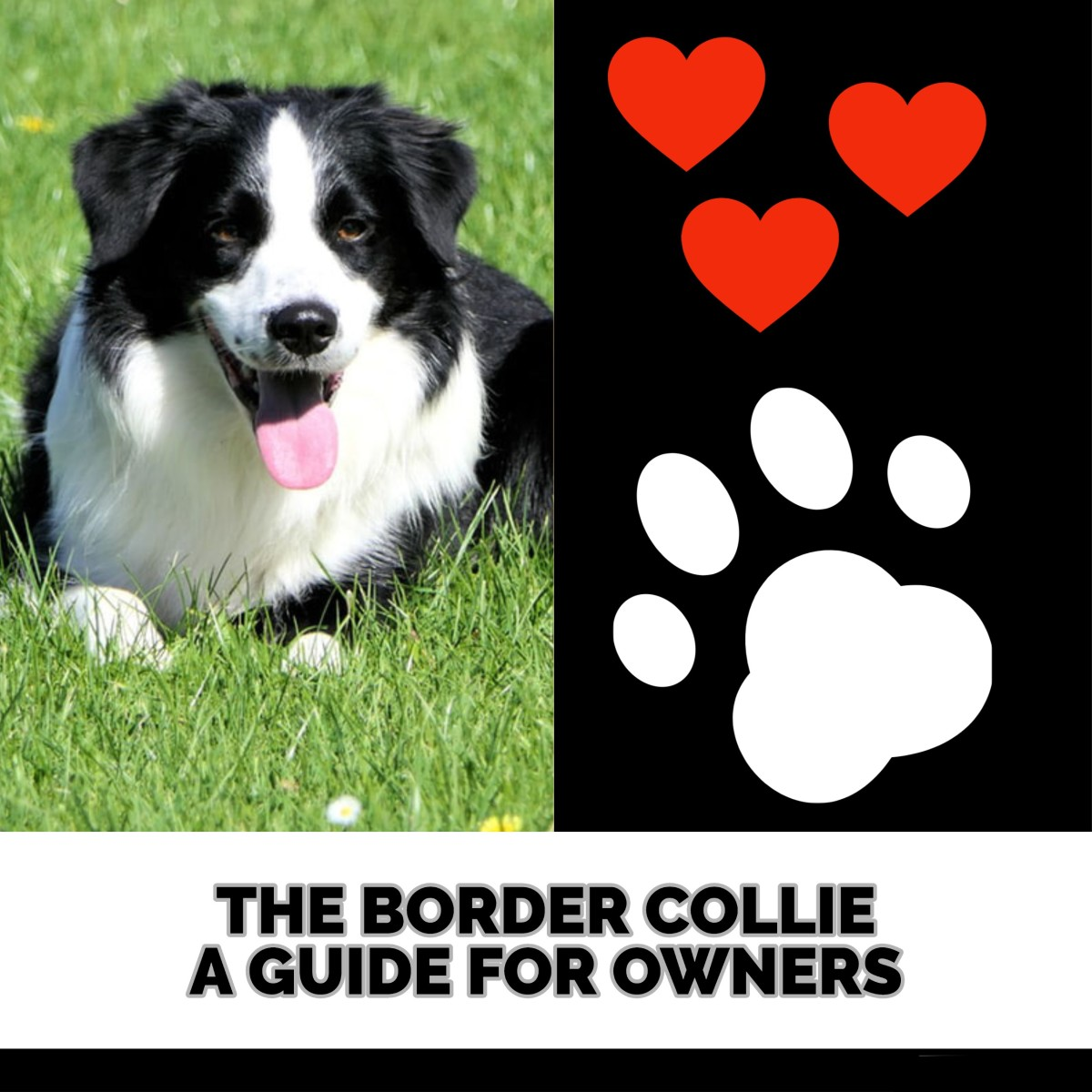 The Border Collie: A Guide for Owners.