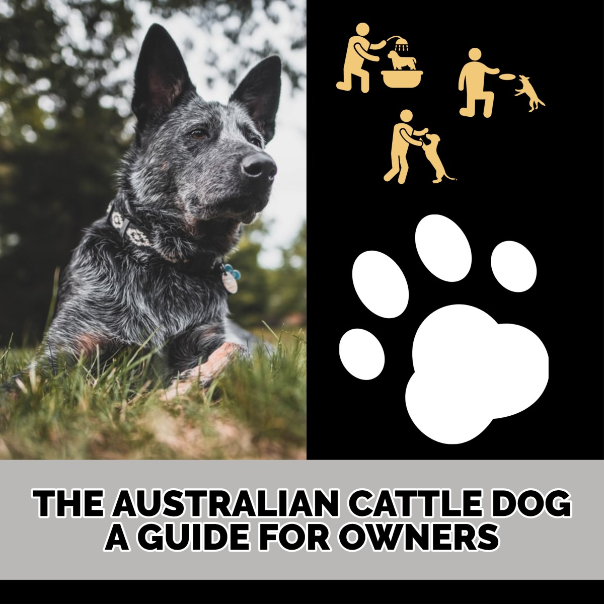 The Australian Cattle Dog: A Guide for Owners.