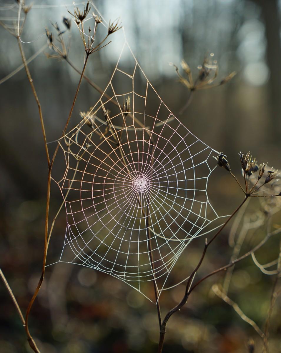 Spider Web Illusions
