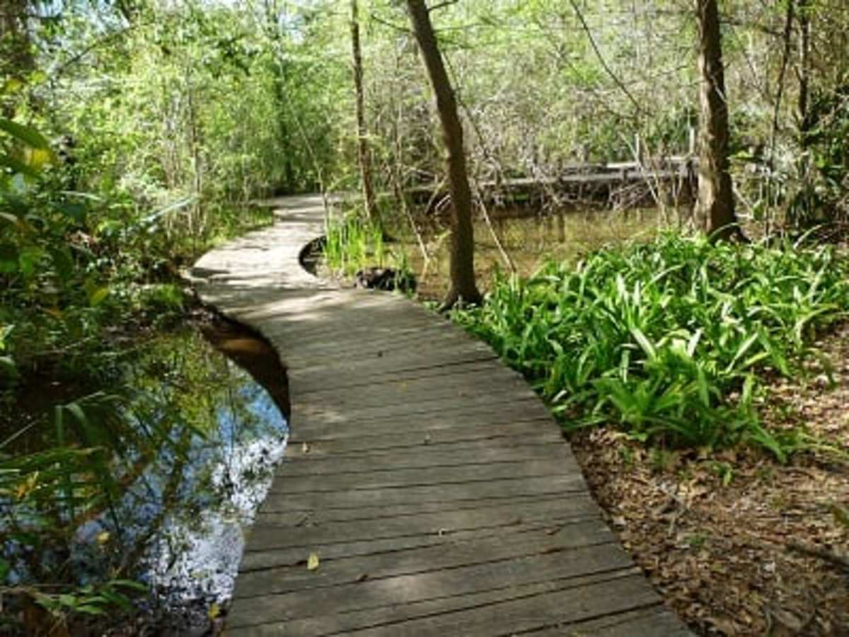 Edith L. Moore Nature Sanctuary Photos and Information