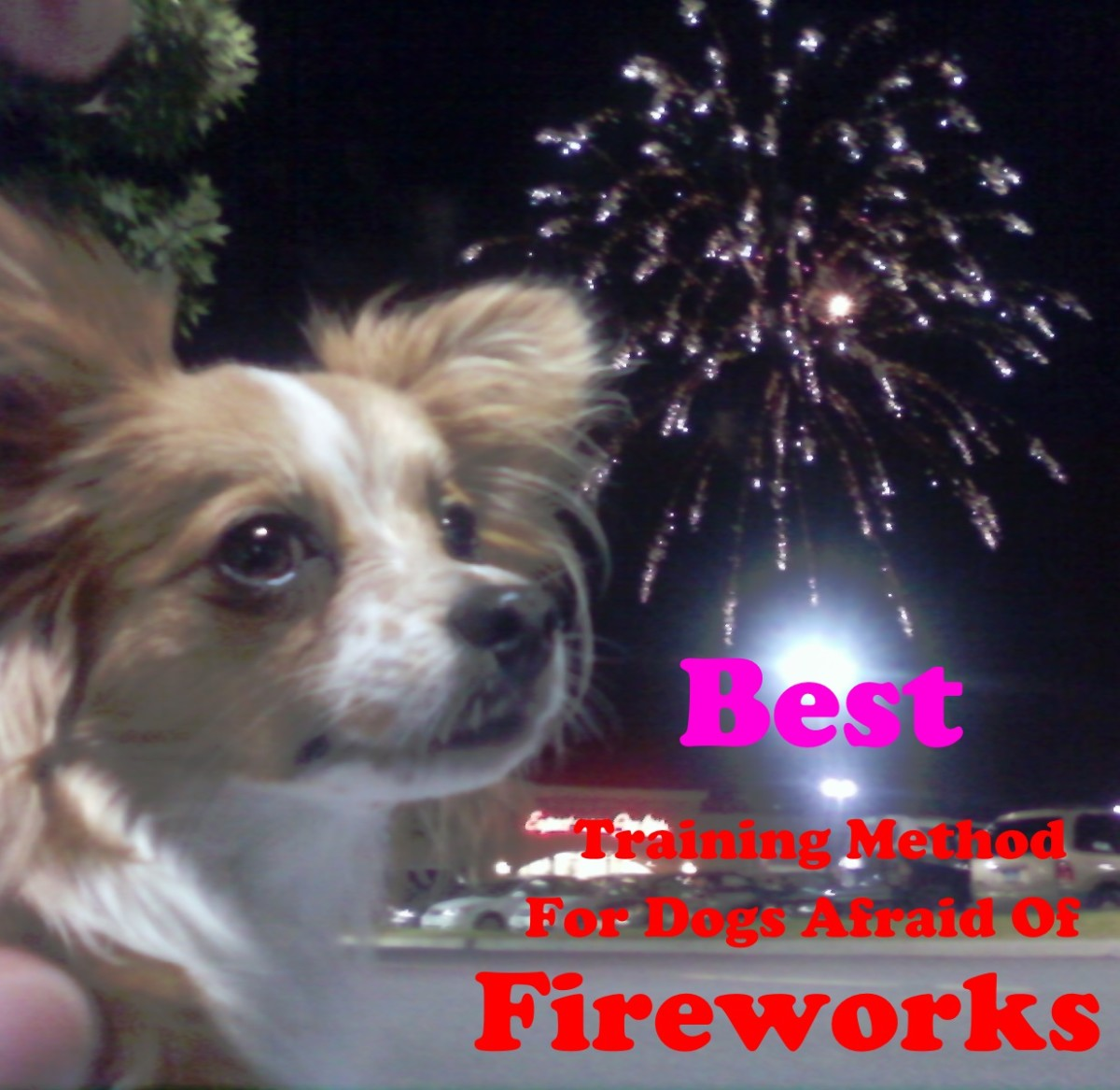 Every dog owner wants their dof calm around fireworks.
