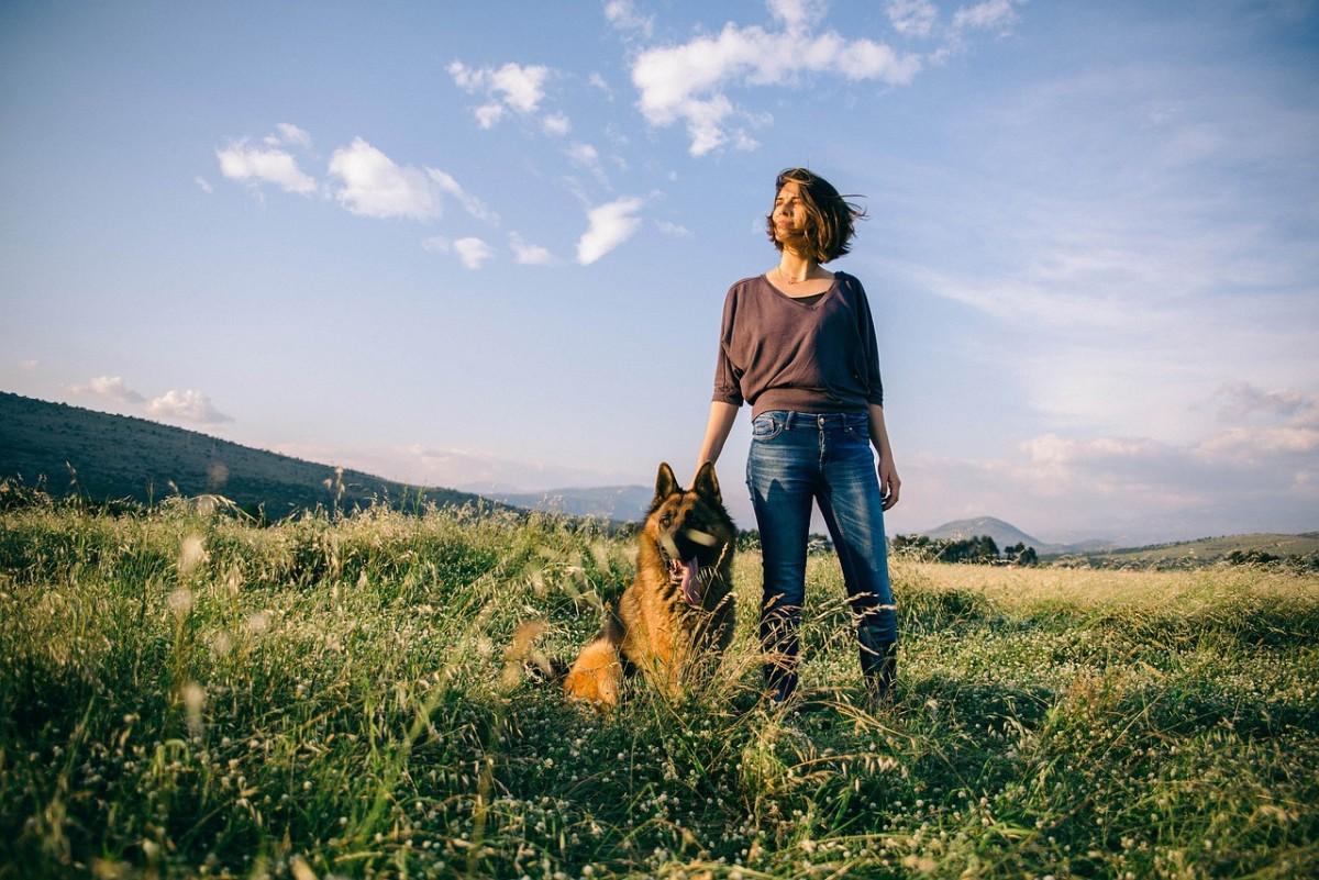 German Shepherd Therapy Dogs