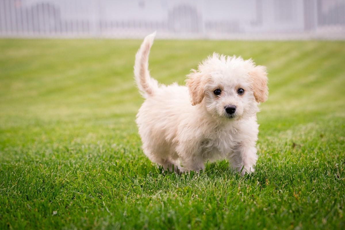 7 Puppy Training Essentials