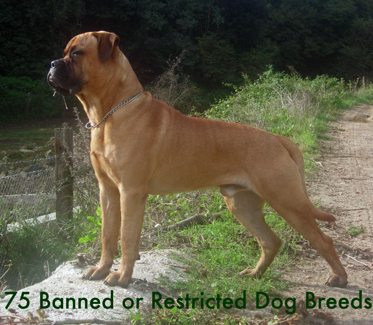List of 75 Banned or Restricted Breeds: Is Your Dog on the New List? You Might Be Suprised.