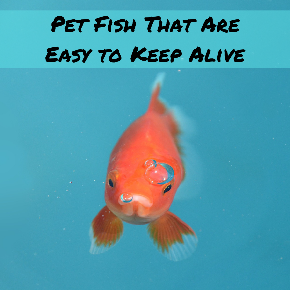Are There Any Fish That Don't Die so Easily?