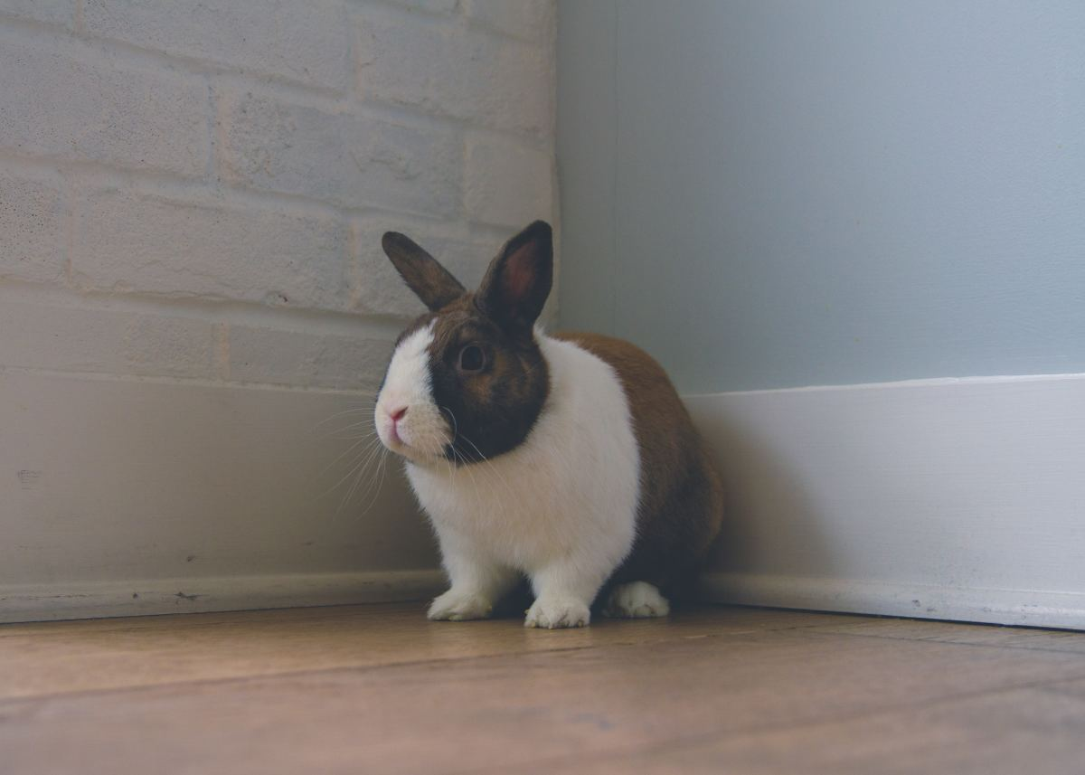 Does My Rabbit Hate Me? How to Be Friends With Your Bunny