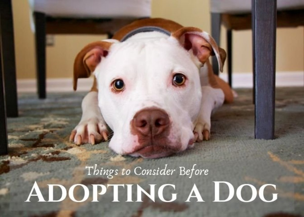 Owning a dog is a wonderful experience, but it is a huge responsibility. Here are something you should think about before deciding to adopt a dog.