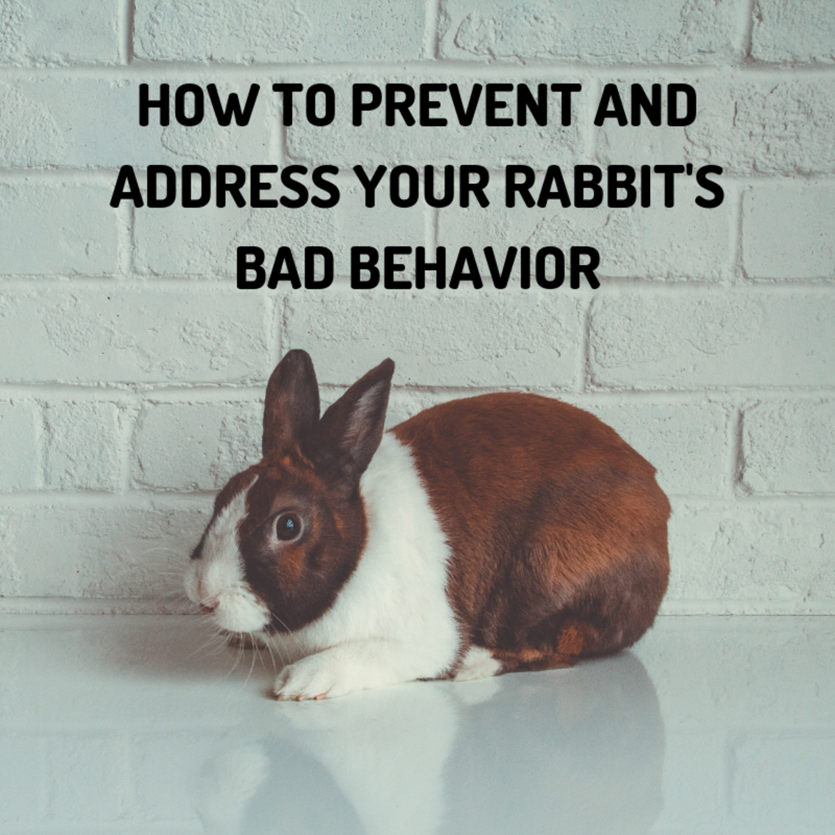 Bunnies and bad behavior go together like peanut butter and jelly. Here's what you can do to minimize their misbehavior.