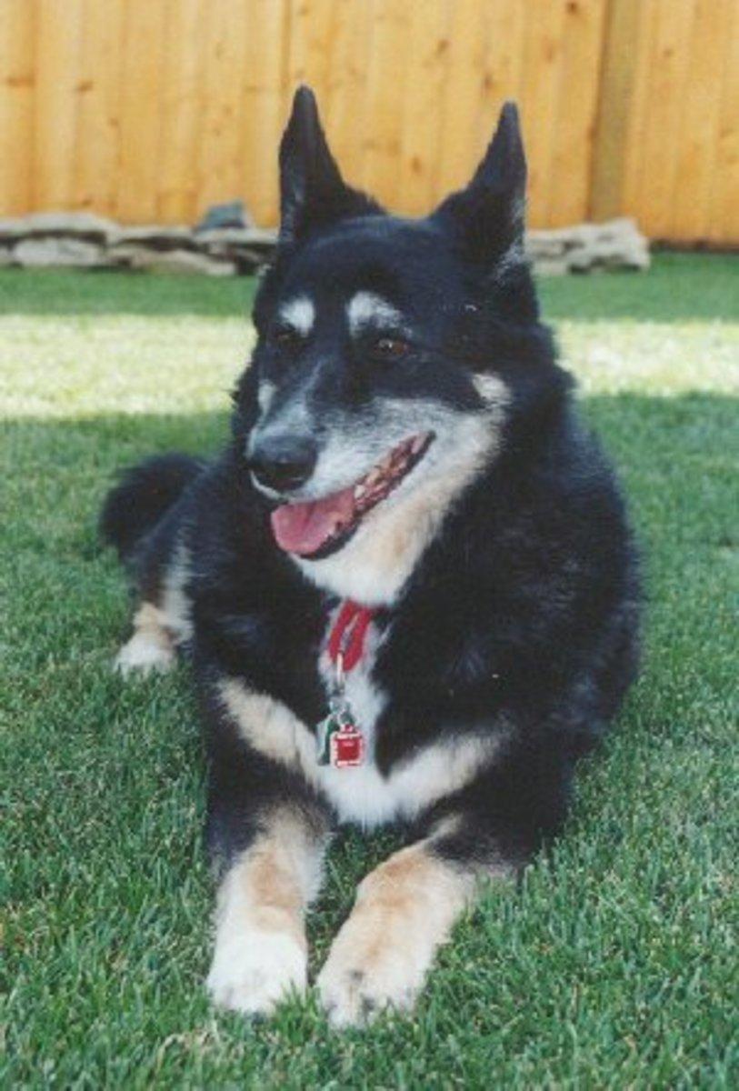adoption-fees-for-pet-adoptions