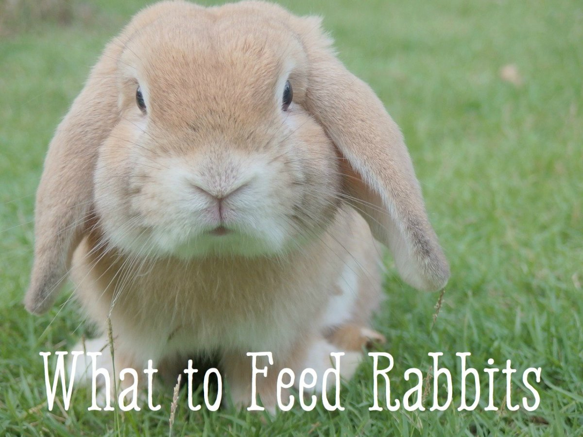 Do you know which foods are safe for your bunny?