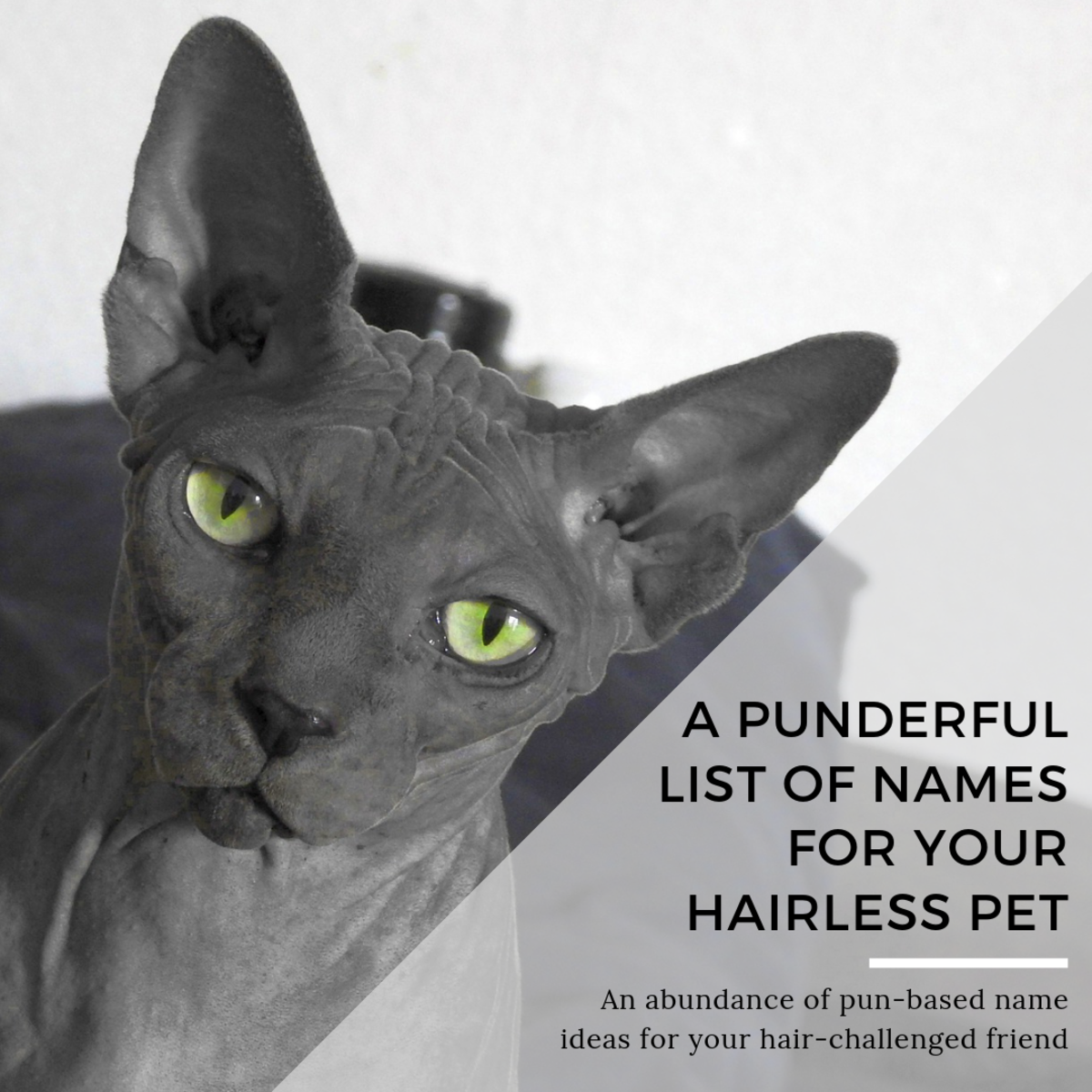 This article will provide a long list of fun, pun-based names for your hairless friend.