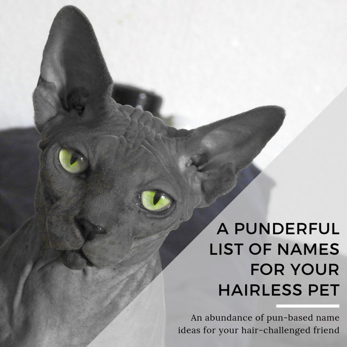 45+ Punderful Hairless Cat Names