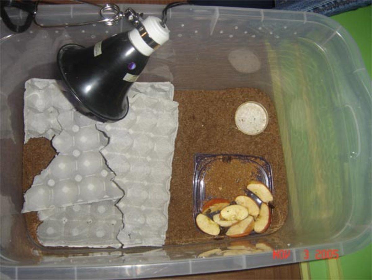 Discoid Roach Breeding Container