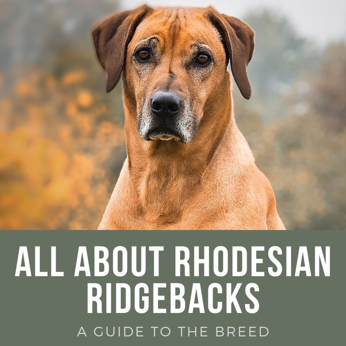 Rhodesian Ridgeback: Breed History, Temperament, and FAQs