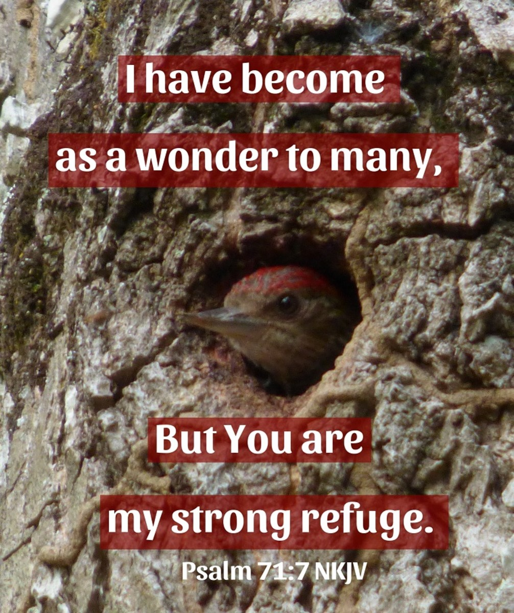 But You are my strong refuge.
