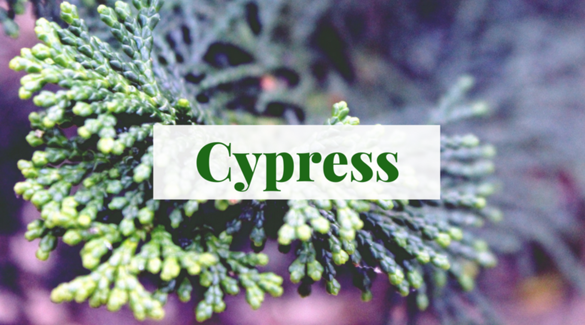 Trees such as the cypress can serve as excellent inspiration for names.