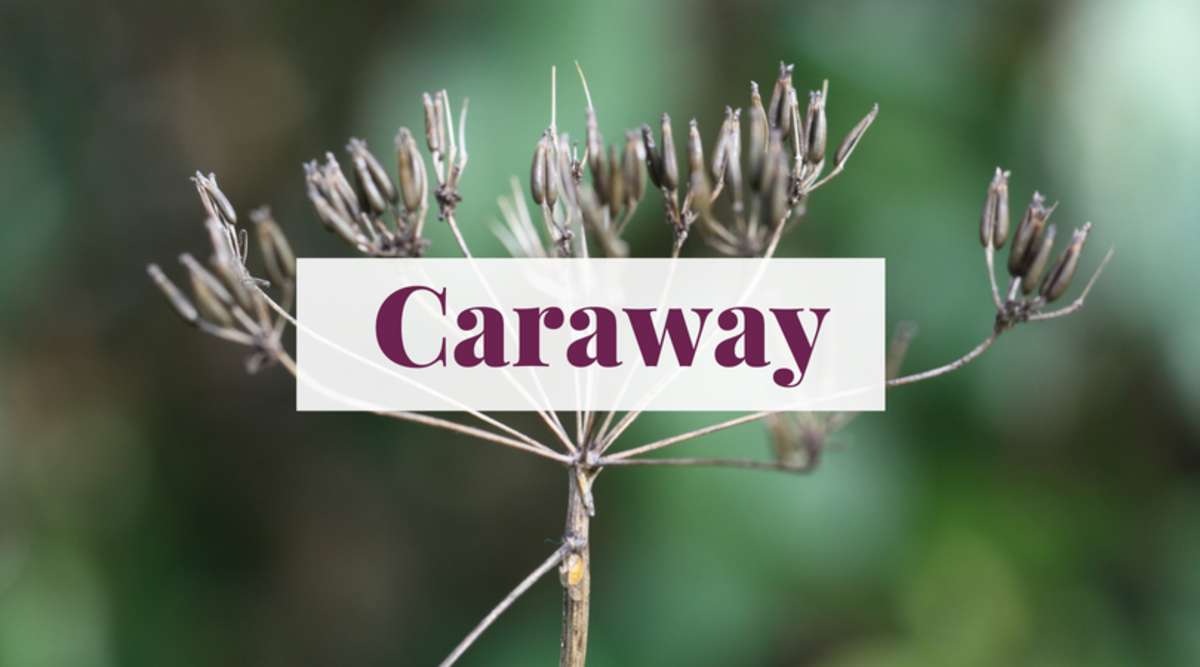 Caraway is a flavorful spice that can also make for a unique and meaningful name.