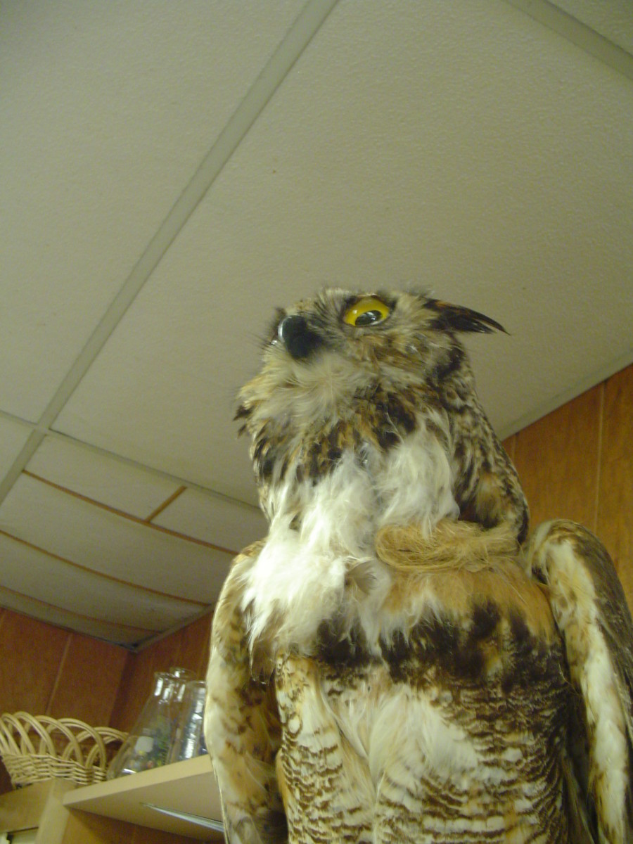 The future environmental issues make this owl scared. Please live responsibly!