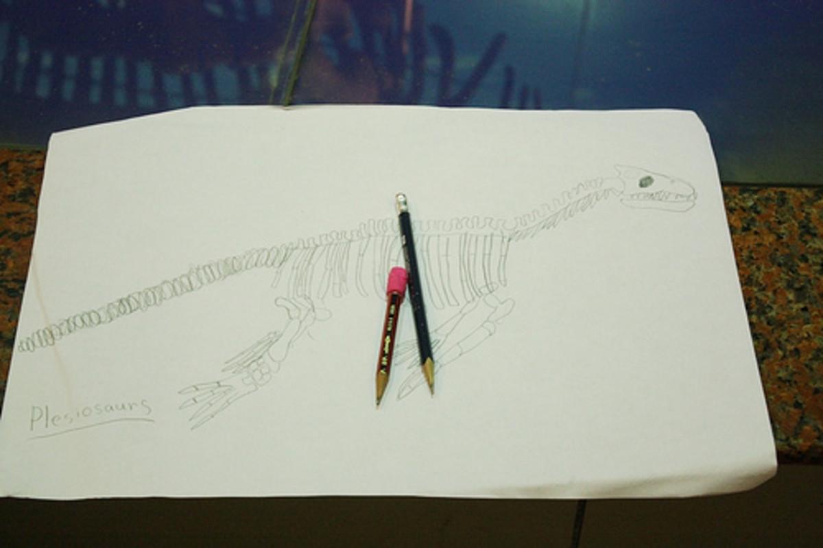 plesiosaur sketch