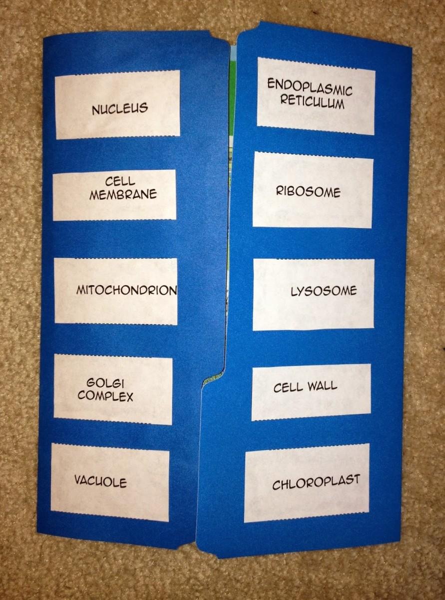 Printable Plant And Animal Cell Plantandanimalcelldiagramjpg