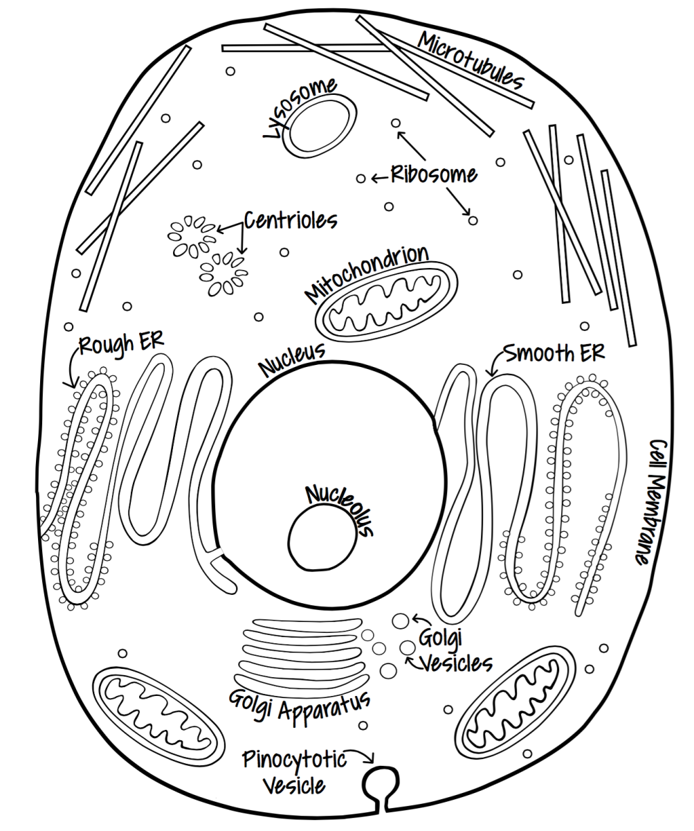 Animal Cell Black And White