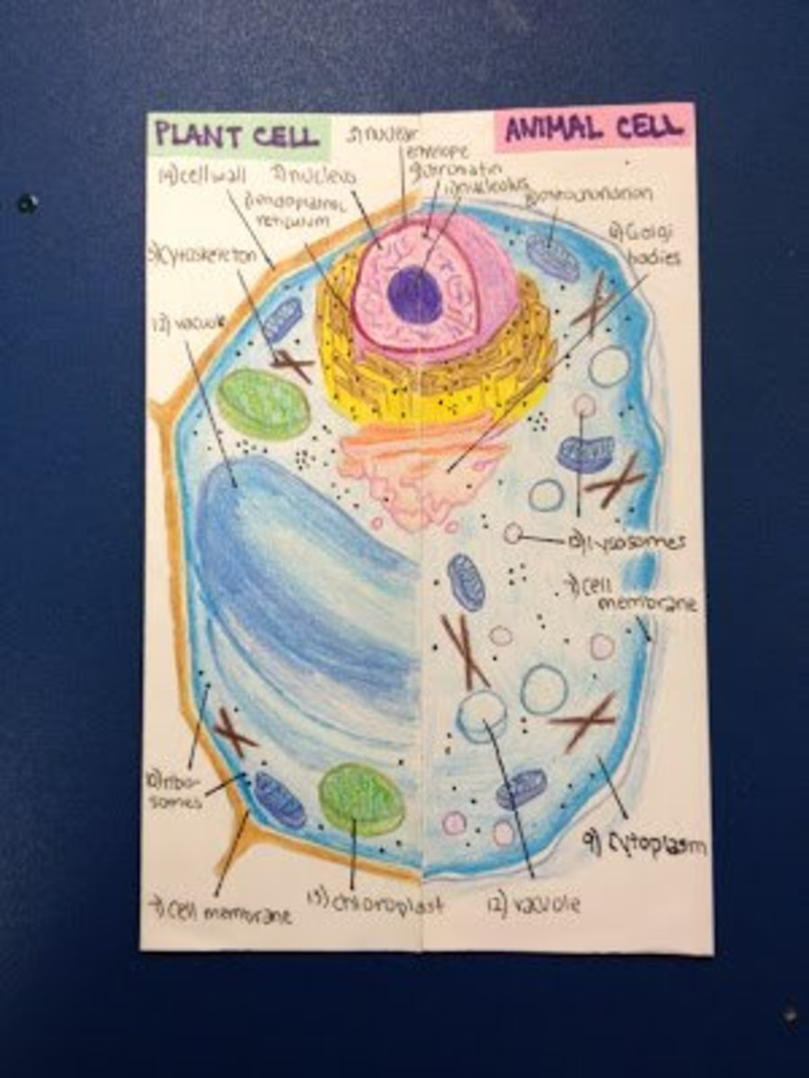 cell-lapbook