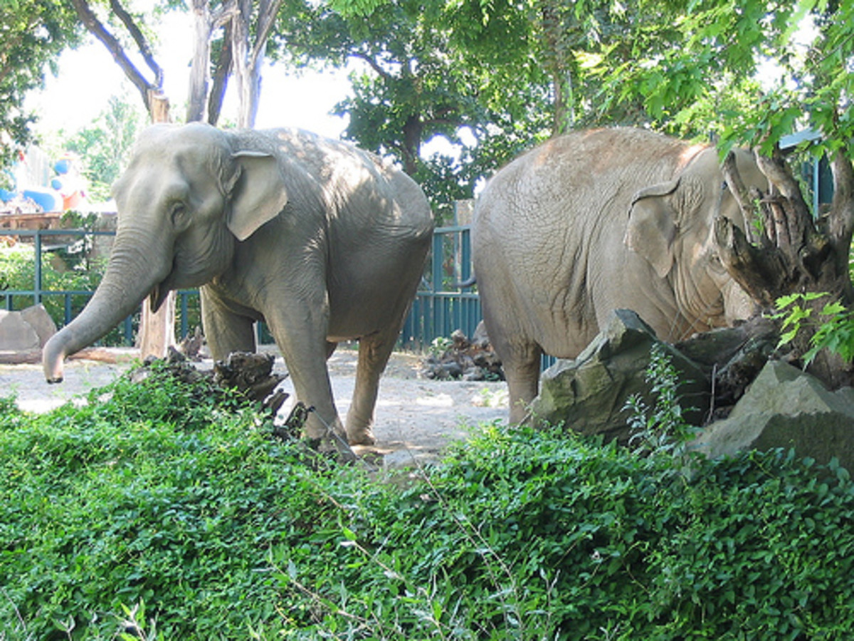 A female elephant is called a cow, and their babies are called calves.