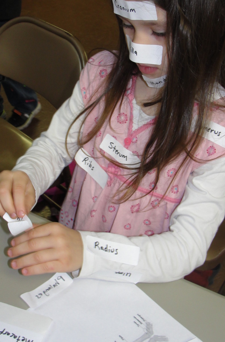 Using stickers to label bones in their bodies