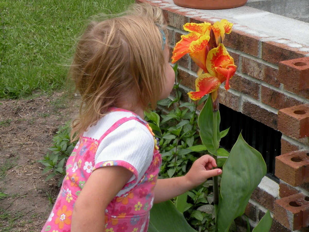 Our 5 year old granddaughter enjoys the scents of flowers as well as the colors.