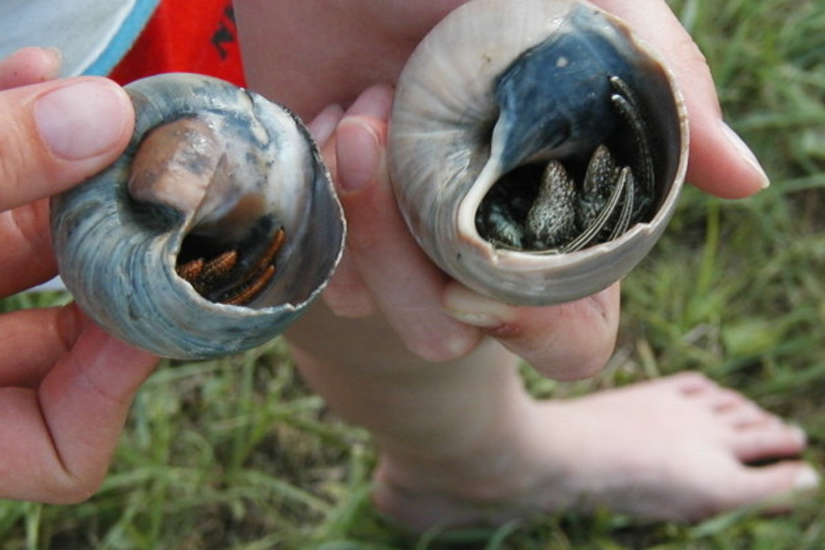 Kids find shells with hermit crabs living in them.