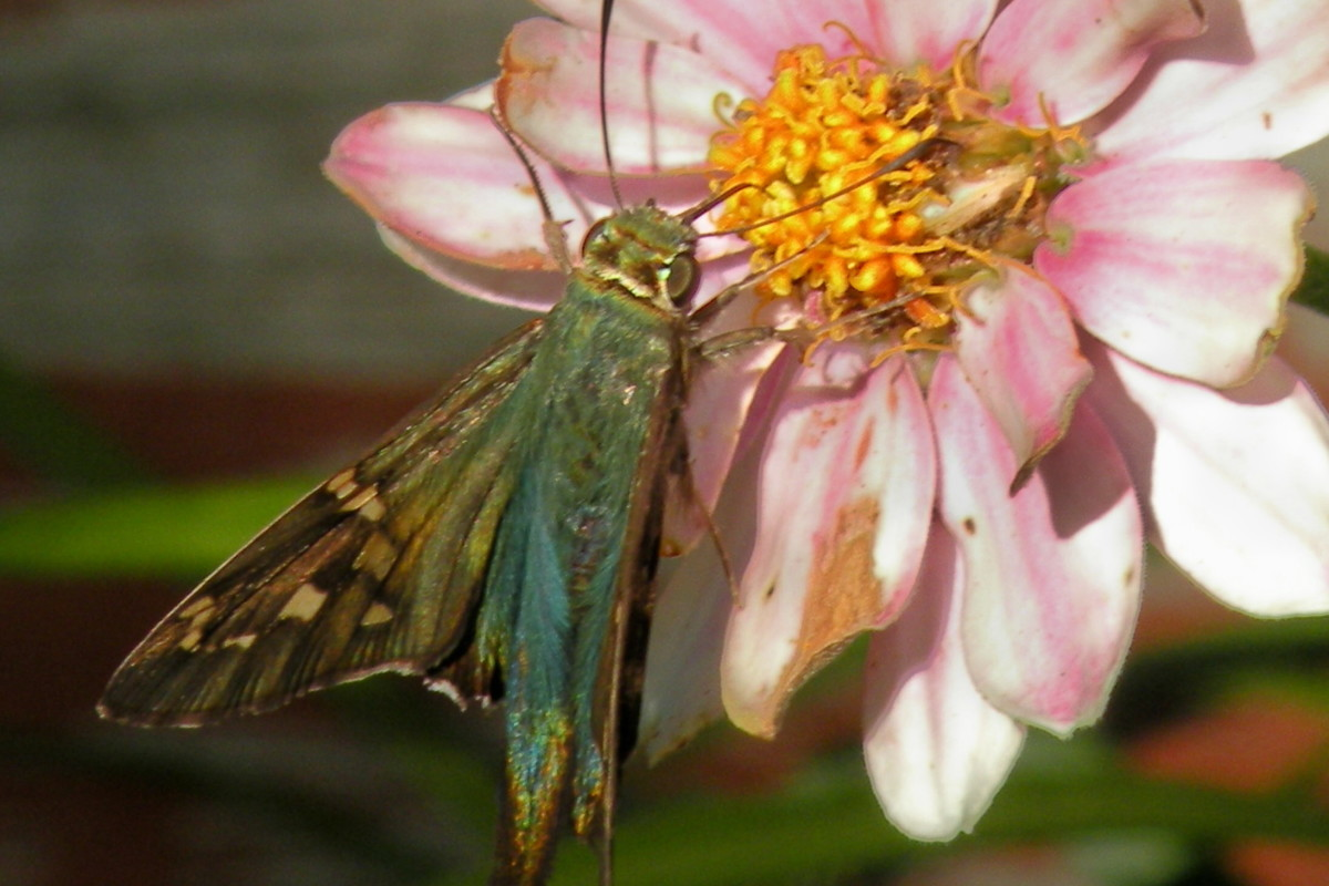Kids love to examine interesting bugs, butterflies and other critters during a nature walk.