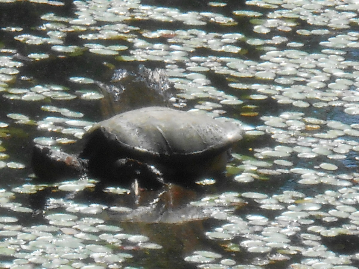 A special treat for kids is finding wildlife like this turtle on a nature field trip!