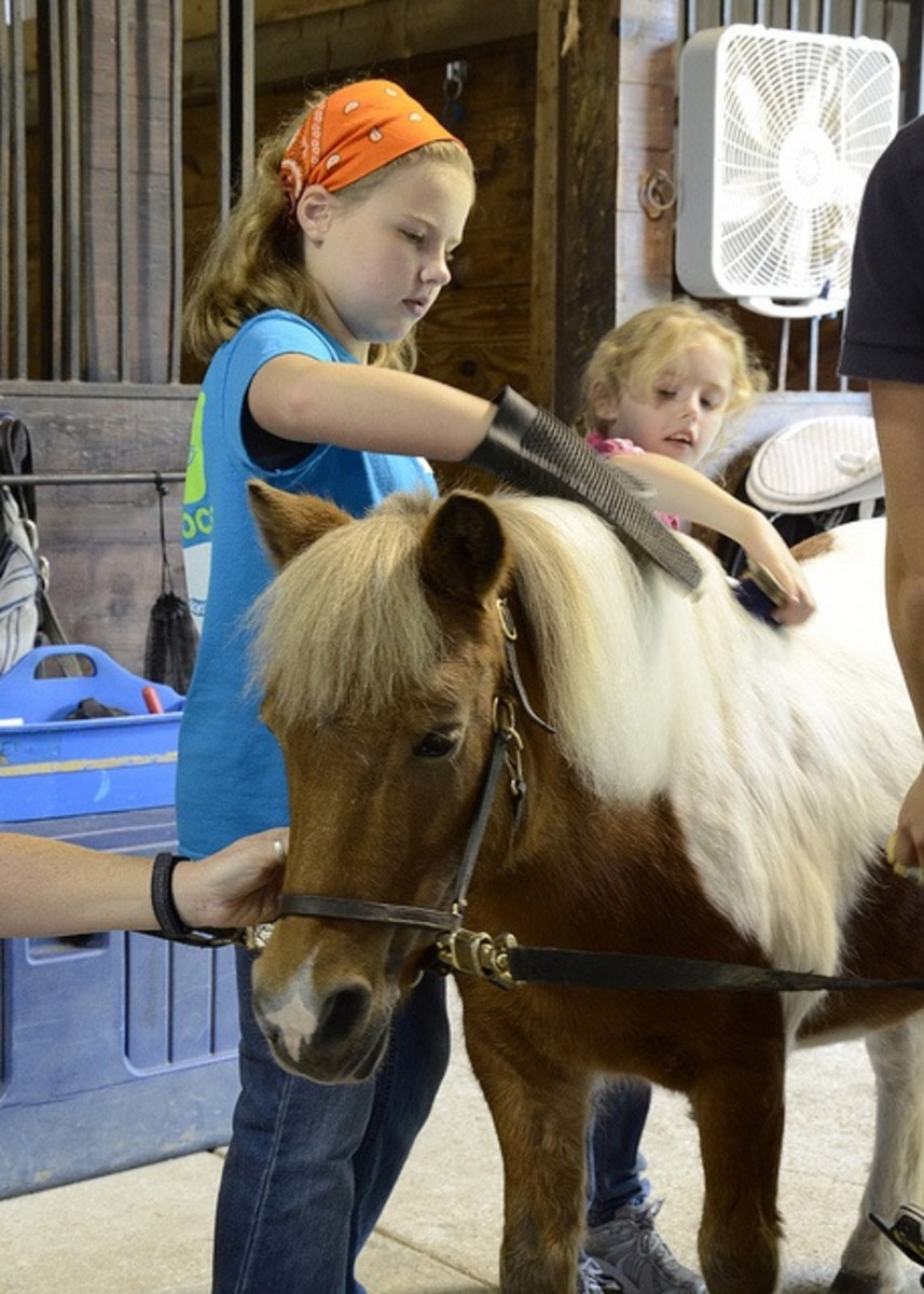 girls grooming a pony