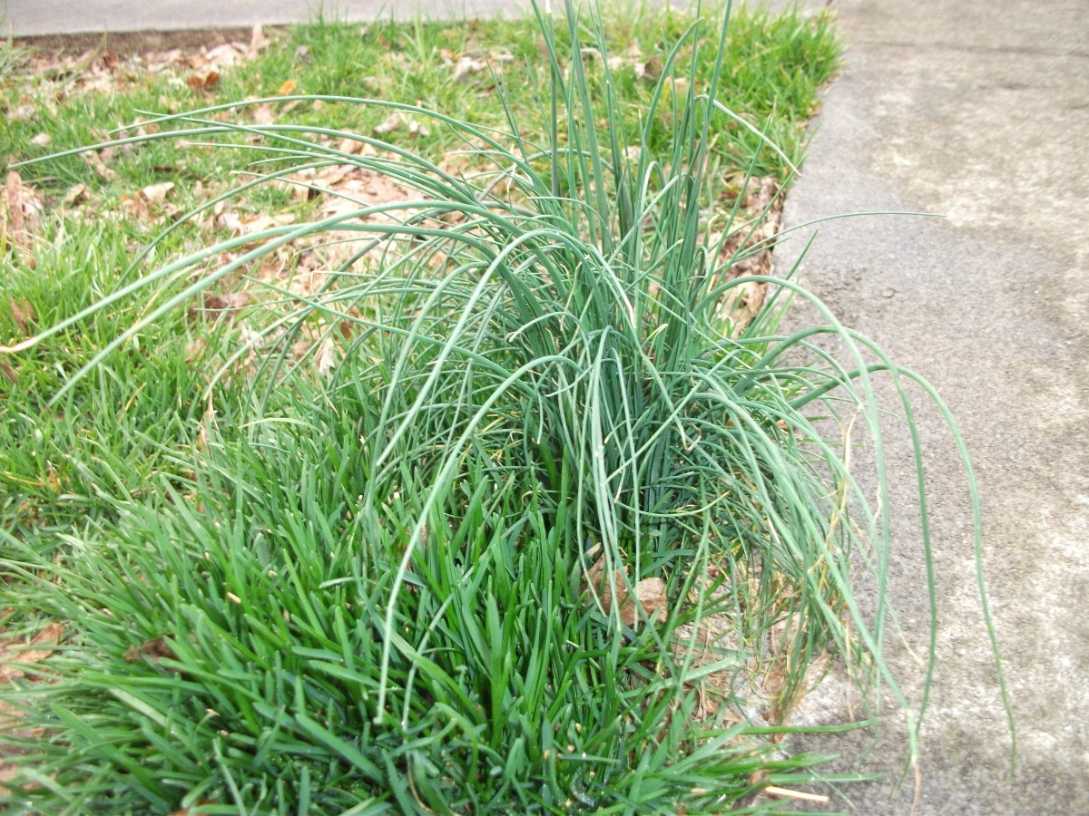 Find some onion grass to smell.  It usually grows quickly so it will be long and swishy.