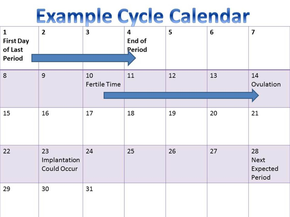 Example of a 28 day menstrual cycle.