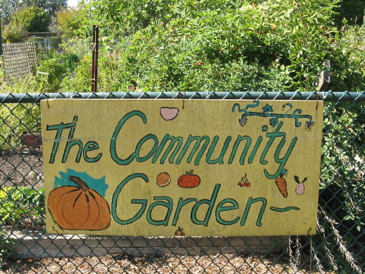 A community garden next to a natural play area