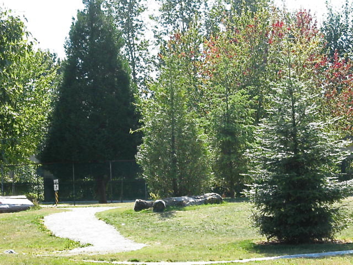 A playground with trees, logs and a winding trail