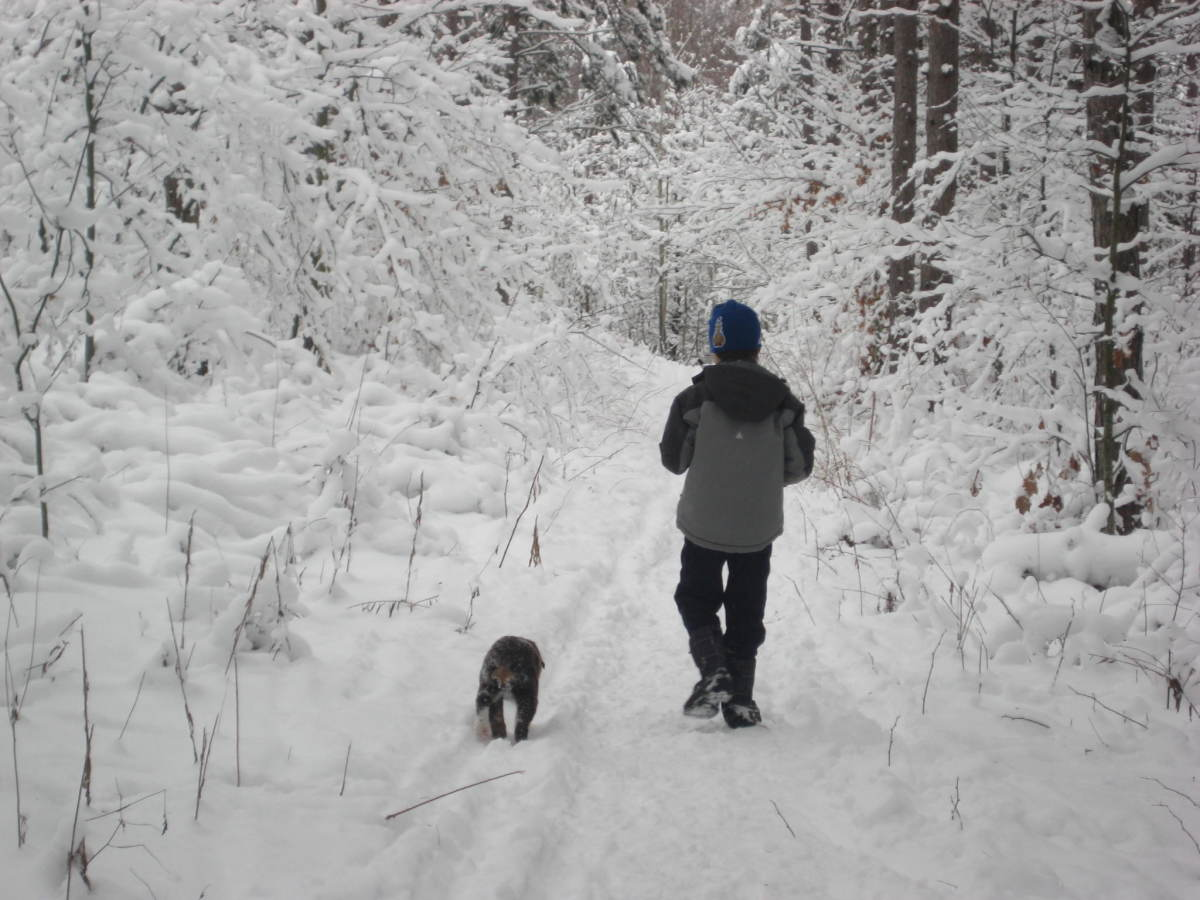 Hiking in the forest after a fresh snowfall.