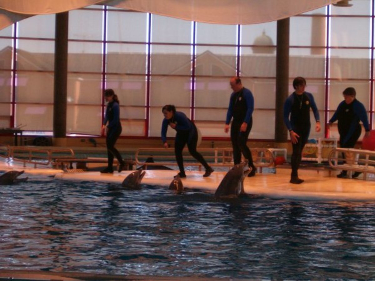 Baltimore Aquarium dolphin show