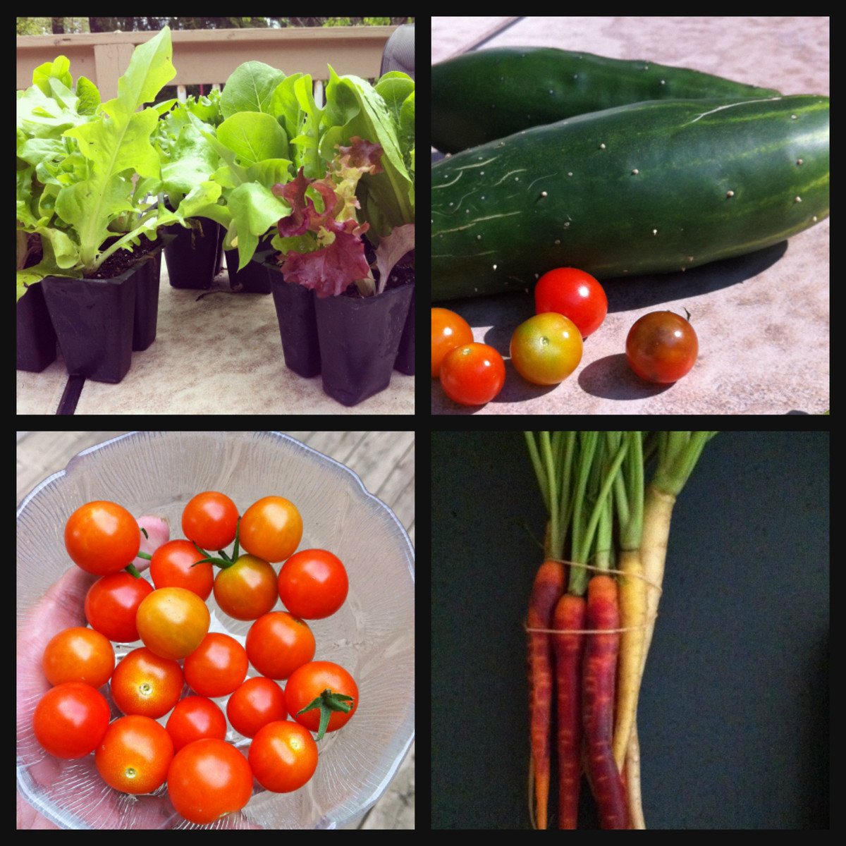 Growing your own vegetables can be a great way to get your child to eat more veggies.