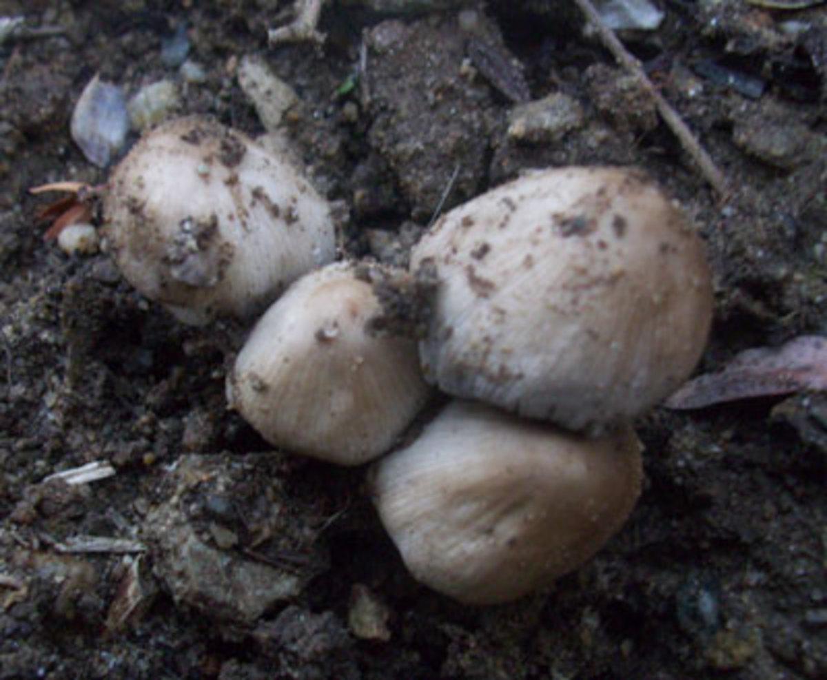 Fungi growing in soil