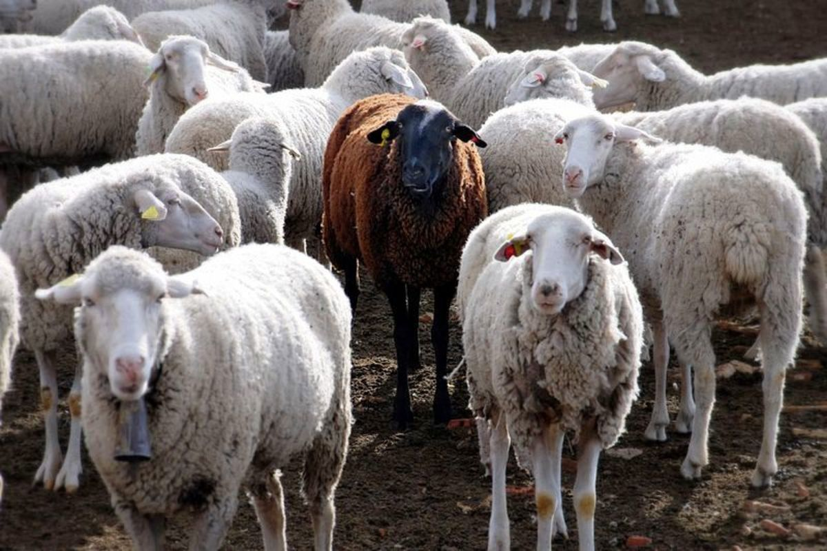 There is no fitting in here, fella.  The black sheep of the flock is the well identified outcast.