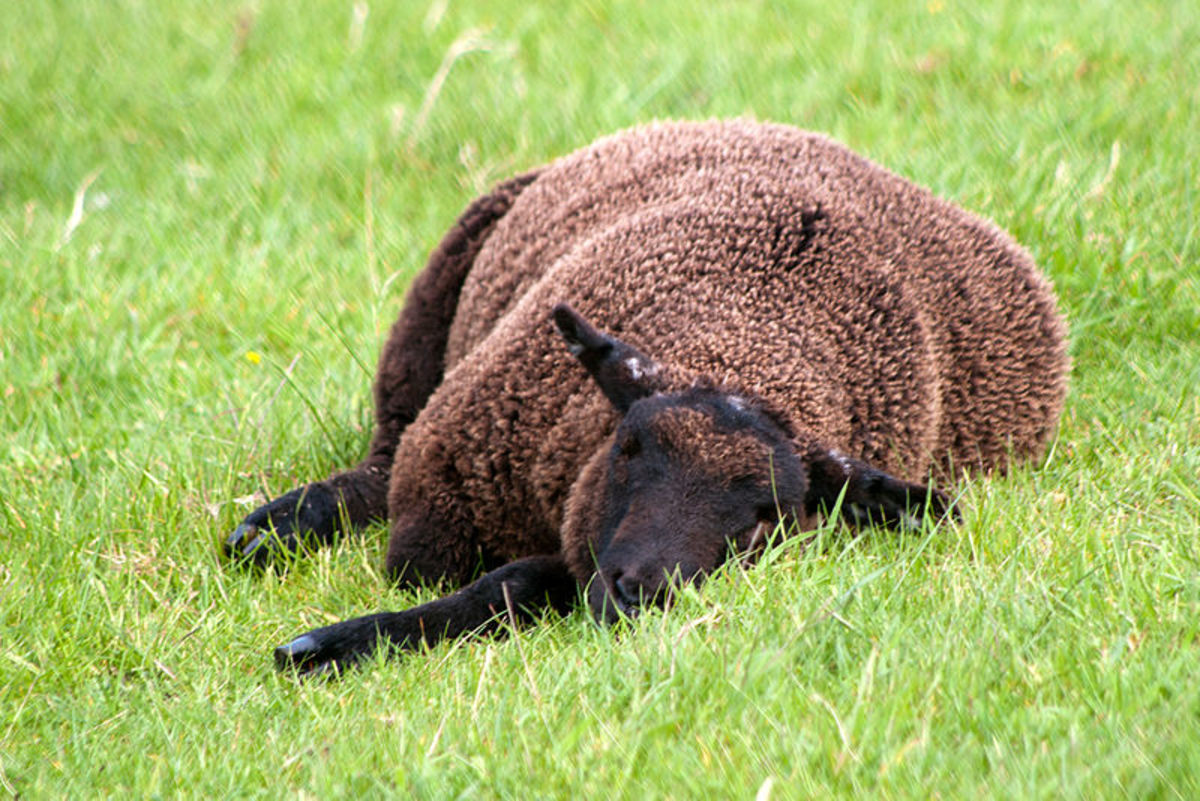 Aww, no one shows this black sheep any love.