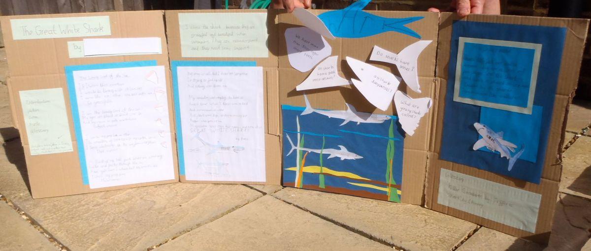 A shark project.