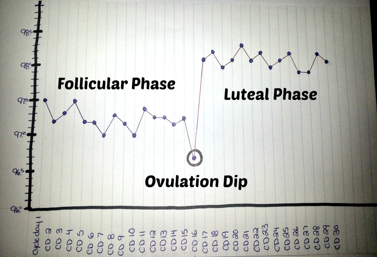 Note: Not everyone experiences an ovulation dip (dip in temperature the day of ovulation).  Luteal phase shown with temperature jump of 0.8 degrees between follicular and luteal phase.