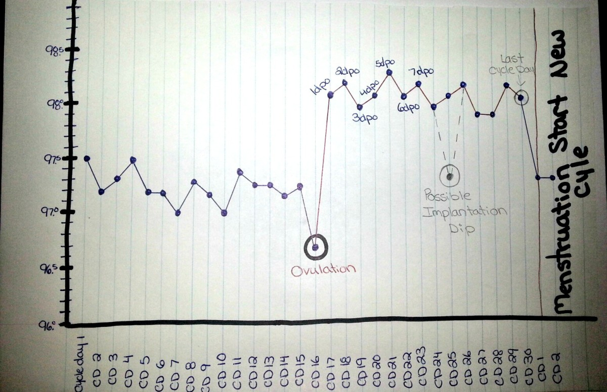 This photo shows how days past ovulation works. It continues until menstruation starts.