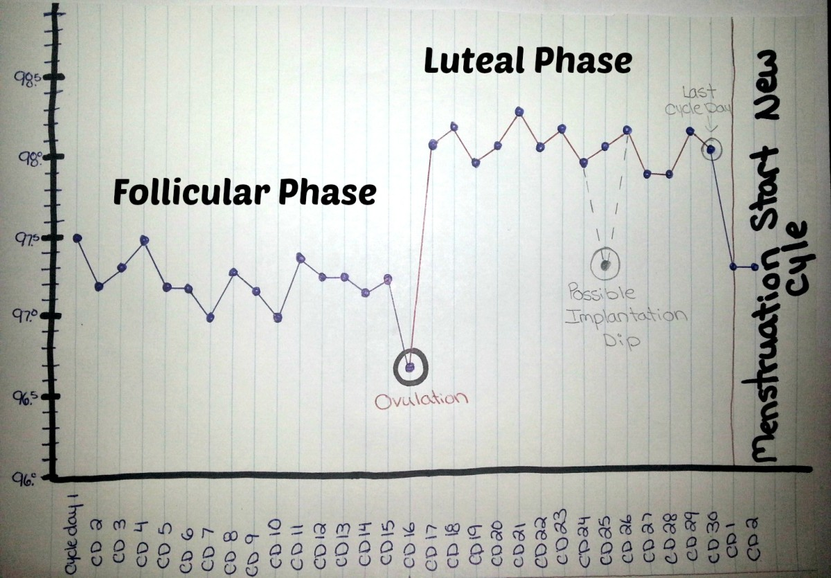 This BBT chart shows the cycle ending. Cycle day (cd) 30 or 14 days past ovulation (dpo) is the last day of the previous cycle. A temperature drop and the start of menstruation indicate the beginning of a new cycle.