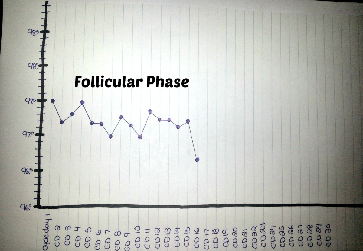 15 days of the follicular phase. Ovulation on cycle day 16.