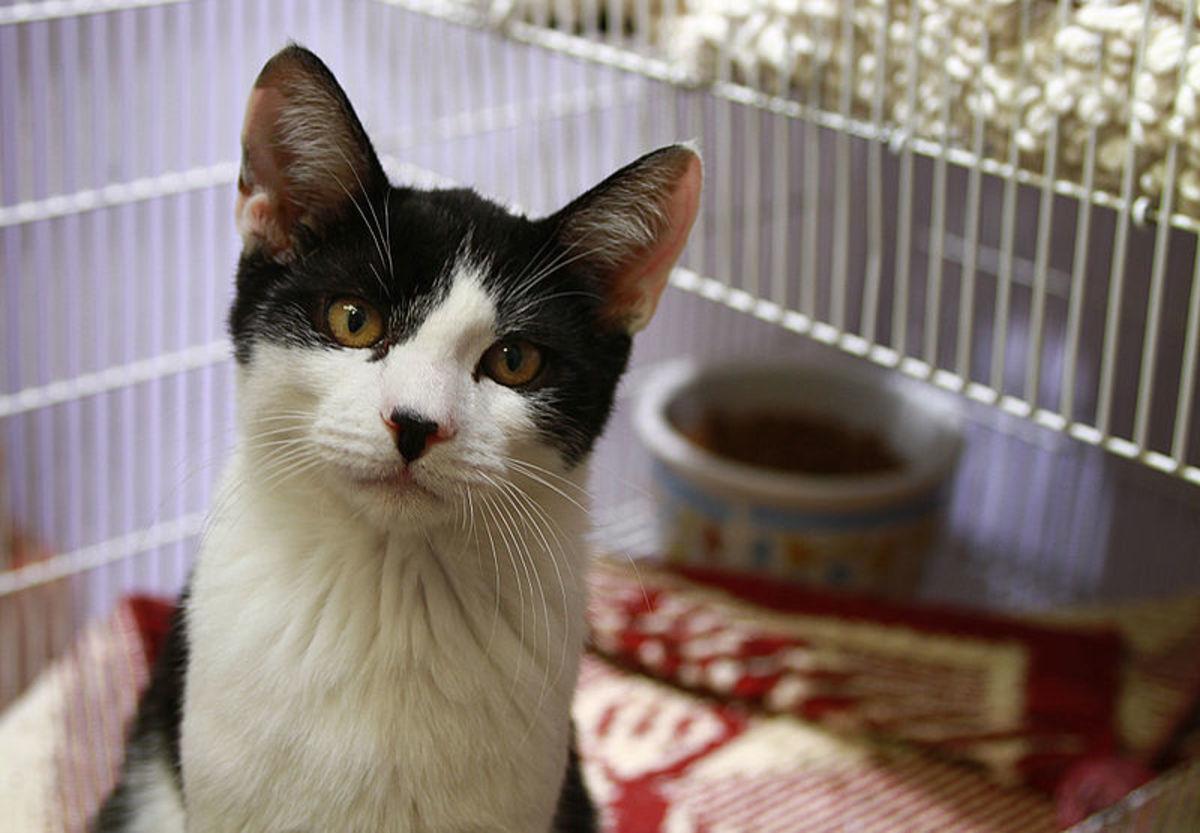 Many animals at shelters enjoy human interaction.